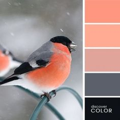 peach & dusky pink against gray and black