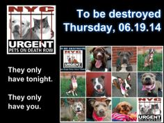 10 beautiful adoptable dogs are relying on us to give them a bright  happy future. Tonight is their last night.  Please share EVERYWHERE!!!  We only have tonight.  To rescue a Death Row Dog, Please read this: http://urgentpetsondeathrow.org/must-read/ To view the full album, please click here:    https://www.facebook.com/media/set/?set=a.611290788883804.1073741851.152876678058553type=3