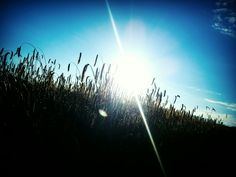 #sun #goesdown #august #sunshine