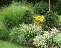 Smart garden Beautiful Evergreen Grasses Landscaping Ideas - Page 48 of 104 Ornamental Grass Landscape, Landscape Borders, Ornamental Grasses, Landscape Grasses, Evergreen Landscape, Driveway Landscaping, Landscaping With Rocks, Backyard Landscaping, Landscaping Ideas