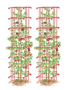 You asked us for taller tomato cages and here they are! Our set of 2 heavy-duty, steel Tomato Towers are super-sturdy. Bean Trellis, Tomato Trellis, Cucumber Trellis, Tomato Cages, Tomato Garden, Tomato Plants, Garden Supplies, Garden Tools, Garden Ideas