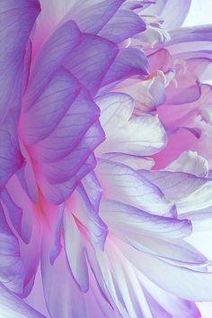 Purple bloom, flower