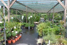 Havuja, hyötykasveja, puita ja pensaita - kevät 2014