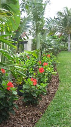 Tropical Outdoor Garden Ideas Full-Sun