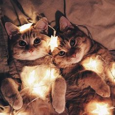 These are some cute cat pictures of felines in a festive mood.