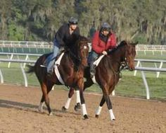 Jess' s Dream ( outside)  the son of Rachael Alexandra and Curlin training at the Stonestreet training center in Florida