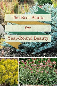 For perennial plants that look good long past summer, choose winter hardy and colorful varieties. Here's a great selection for low-maintenance curb appeal all year long.