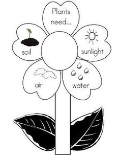 Printable plant with the 4 things it needs to grow. Nice to print off on index paper and use as a bulletin board display for Spring. Science Experiments Kids, Science Lessons, Science For Kids, Science Activities, April Preschool, Kindergarten Science, Preschool Crafts, Plant Lessons, Parts Of A Flower