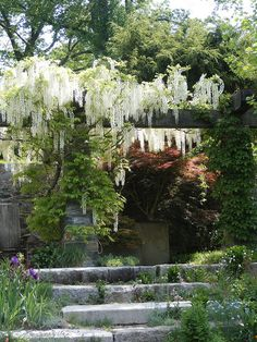 Wisteria-covered pergola at Chanticleer overlooking the pond garden. When early in concept, your pergola may Outdoor Pergola, Backyard Pergola, Pergola Plans, Pergola Kits, Pergola Ideas, Small Pergola, Pergola Roof, Cheap Pergola, Wooden Pergola