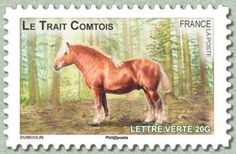 Trait Comtois (Equus ferus caballus)