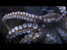 Sony Gave An Octopus At A New Zealand Aquarium A Camera; Trains It To Photograph Tourists - DIY Photography