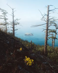 Sat here on a spring morning watching the fog roll in over Northwest Pass.. Fidalgo Island Washington State [OC] [1999 x 2500]