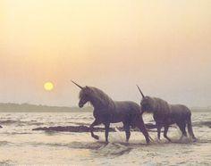. . unicorn . .