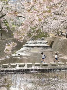 Kids playing under the cherry trees in Hyogo, Japan #KidsAroundTheWorld