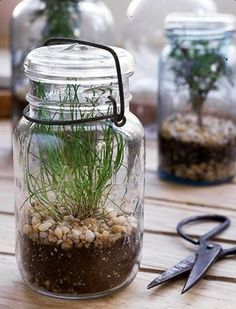 Plant jar - might be a good use for all these moccona jars!