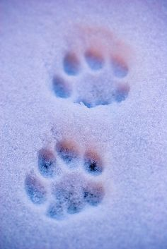 Cat paws are fascinating. Get some interesting facts, see photos, and find out how to save your pet's paw prints as a keepsake. Crazy Cat Lady, Crazy Cats, Cat Paws, Dog Cat, I Love Cats, Cute Cats, Animals And Pets, Cute Animals, Cat Paw Print