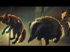 Süßer Weihnachtsclip: Tiere erobern das Trampolin