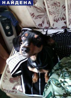 Найдена собака такса г.Оренбург http://poiskzoo.ru/board/read30924.html  POISKZOO.RU/30924 В районе .. городской больницы г. Оренбурга найдена собака, такса, девочка. Была с черным ошейником. Ушки порванные. Очень ищем хозяина. Телефон:...   РЕПОСТ! @POISKZOO2 #POISKZOO.RU #Найдена #собака #Найдена_собака #НайденаСобака #Оренбург