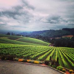vineyards in mcminnville, oregon