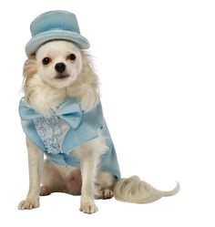 Rasta Imposta Dumb and Dumber Harry Blue Tuxedo Dog Costume, X-Small Rasta Imposta http://www.amazon.com/dp/B00CHUMDU6/ref=cm_sw_r_pi_dp_V4dfxb0GD2BK1  200 each