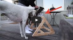 This man needed something to keep his Greyhounds occupied, so he created a puzzle for dogs, and I love the results!