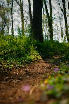 forest path | nature photography