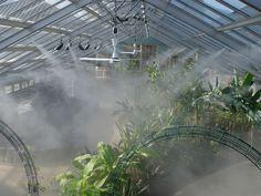 Image result for greenhouse misT