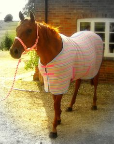 Horse blankets. I squeal every time I pass by a field and see horses plodding around in these.