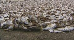 Over a Thousand Fish Found Dead in Connecticut River