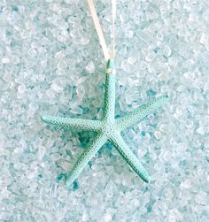 This Natural Starfish Ornament Set features beautiful natural starfish painted a pretty aqua. Hang on your tree or add to your decorations. You can also tie them on special gifts for an extra nice … Coastal Christmas Decor, Coastal Decor, Holiday Decor, Coastal Style, Coastal Living, Starfish Painting, Beach Supplies, Turquoise Christmas, Beach Ornaments