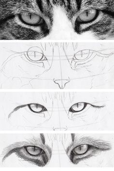 Draw Human Eyes dessin réaliste des yeux de chat dans les étapes - Cats have some of the most intriguing eyes around — which is why they're a fun drawing challenge. Learn how to draw cat eyes right meow on Craftsy! Human Eye Drawing, Realistic Eye Drawing, Drawing Eyes, Painting & Drawing, Kitty Drawing, How To Draw Realistic, Realistic Drawings Of Animals, Manga Drawing, Figure Painting