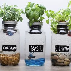 "8,996 Likes, 376 Comments - @blossom on Instagram: ""DIY Self-Fertilizing Aquarium Planters"""