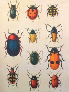 Colorful bugs by redinfred