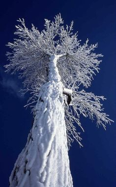 Oh beautiful! - Tree covered with snow.