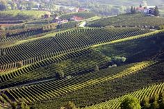 """""""Milan and Piedmont"""" private tour, featuring 8 days of delicious food, great wines, art & traditions and extraordinary scenery Italy In October, Piedmont Wine, Barolo Wine, Virginia Wineries, Spanish Wine, Italy Tours, California Wine, Wine Cellar, Italy Travel"""