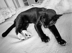 Lazy Cat Sleeping, Have A Laugh, Lazy, Funny, Animals, Animales, Animaux, Funny Parenting, Animal