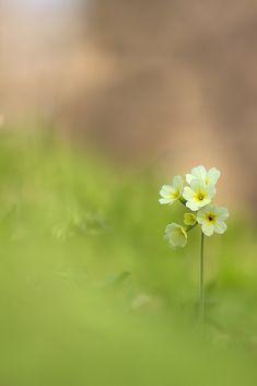 pretty little flower