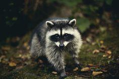 Mr. Masked Cutie Patootie // by Lizzy Gadd