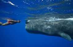 Andrew Armour has become known as the Whale Whisperer after forming a special bond with a colossal sperm whale.