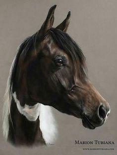 Wildlife Paintings, Animal Paintings, Horse Drawings, Animal Drawings, Pretty Horses, Beautiful Horses, Hereford Cows, Horse Artwork, Painted Pony