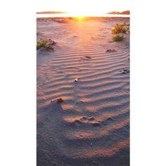 Wolf Prints // Ahous Bay // Vargas Island // Sunset