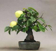 盆栽 - Google 検索