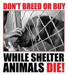 #Follow #MissQuantum | www.missquantum.com | #AnimalProtection #PetVideos #Pets #Videos #CutePetVideos #FunnyAnimalVideos #Animals #BestofPinterest #FunnyAnimals #Dog #Dogs #Puppies #Cat #Cats #Kittens #Farm #Wildlife #PetLovers #AnimalLovers #ILoveAnimals #AdoptDontShop #Birds #Parrots #Ocean #Marine Amor Animal, Mundo Animal, Cane Corso, Sphynx, Rescue Dogs, Animal Rescue, Shelter Dogs, Animal Testing, I Love Dogs