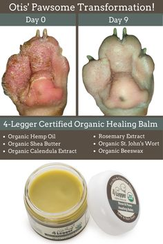Does your dog have chapped skin? We can help! http://www.4-legger.com/collections/all/products/healing-balm. Our USDA Certified Organic Healing Balm with Organic Hemp Oil, Organic Shea Butter, Organic Rosemary Extract, Organic Calendula Extract, Organic St. John's Wort, and Organic Beeswax provides fast and safe & non-toxic results!