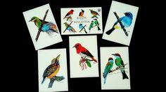 Colourful Birds Of Malaysia · Sharon SS KowSharon SS Kow