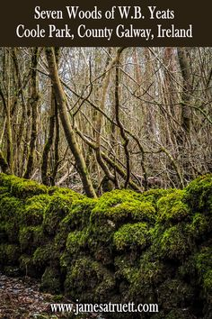 Mossy Rock Fence in Yeats' Seven Woods at Coole Park, County Galway, Ireland. http://www.jamesatruett.com