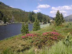 Almrausch am Windebensee Mountains, Nature, Travel, Naturaleza, Viajes, Destinations, Traveling, Trips, Bergen