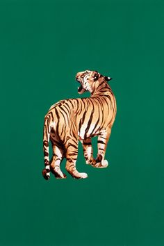 The late artist and BOMB co-founder Sarah Charlesworth is experiencing something of a revival. Tableau Pop Art, Tiger Illustration, Tiger Art, Pics Art, Aesthetic Pictures, Cute Wallpapers, Aesthetic Wallpapers, Art Inspo, Cool Art
