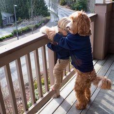 本物 かな?。 Мальчик и собака: крепкая дружба в трогательных фото