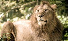 10 Ways to Celebrate National Wildlife Day